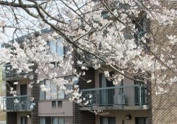 Exterior of an apartment building next to a tree with white flowers